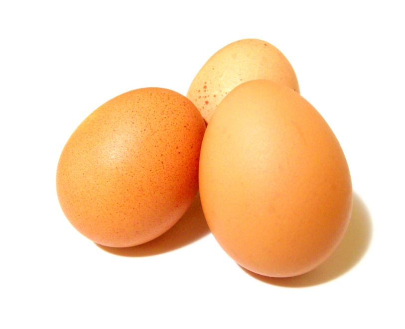 les oeufs source de protéines