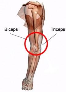 maigrir-bras-triceps