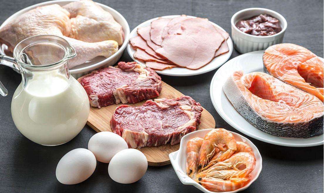sources en protéines