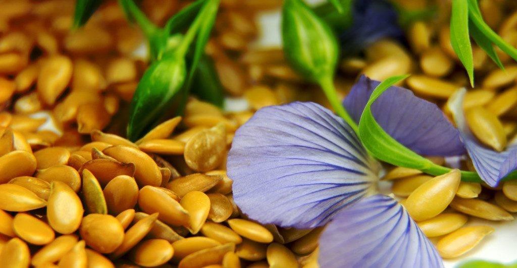 perte de poids avec les graines de lin