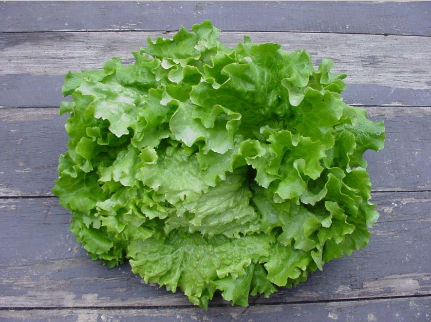salade verte pour la santé